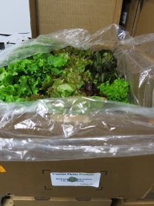 Fresh lettuce from Grifton on waiting for delivery