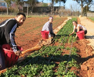 Guilford College Students picking spinach in February (l-r, Marko Mandalinc, Lily Collins, Charlotte Lippincott)