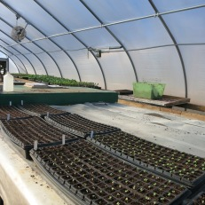 Sprouts in the greenhouse