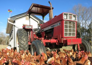 Chicken tractor #2 at Summerfield Farms