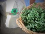 Fresh herbs & hat