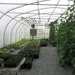 Neatly arranged greenhouse