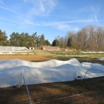 Hoop houses and covered rows keep the growing seasons long