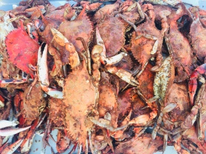 Local blue crabs